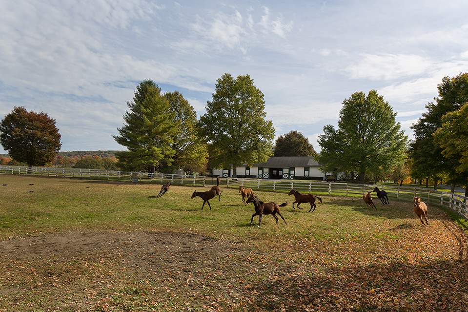 Sugar Maple Farm includes facilities for racehorse breeding and training.