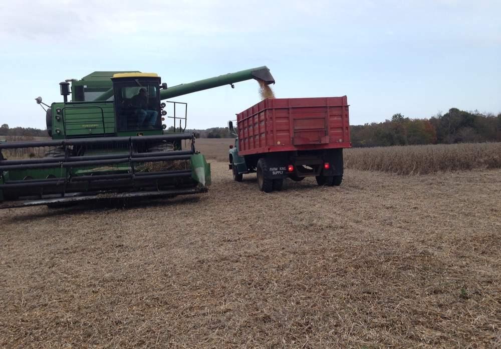 农场所在地气候温和,冬季最寒冷的月份平均温度为摄氏10度。(图片来源:Patricia Maddux)
